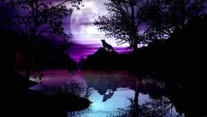 Wolf Night Sky Wallpapers