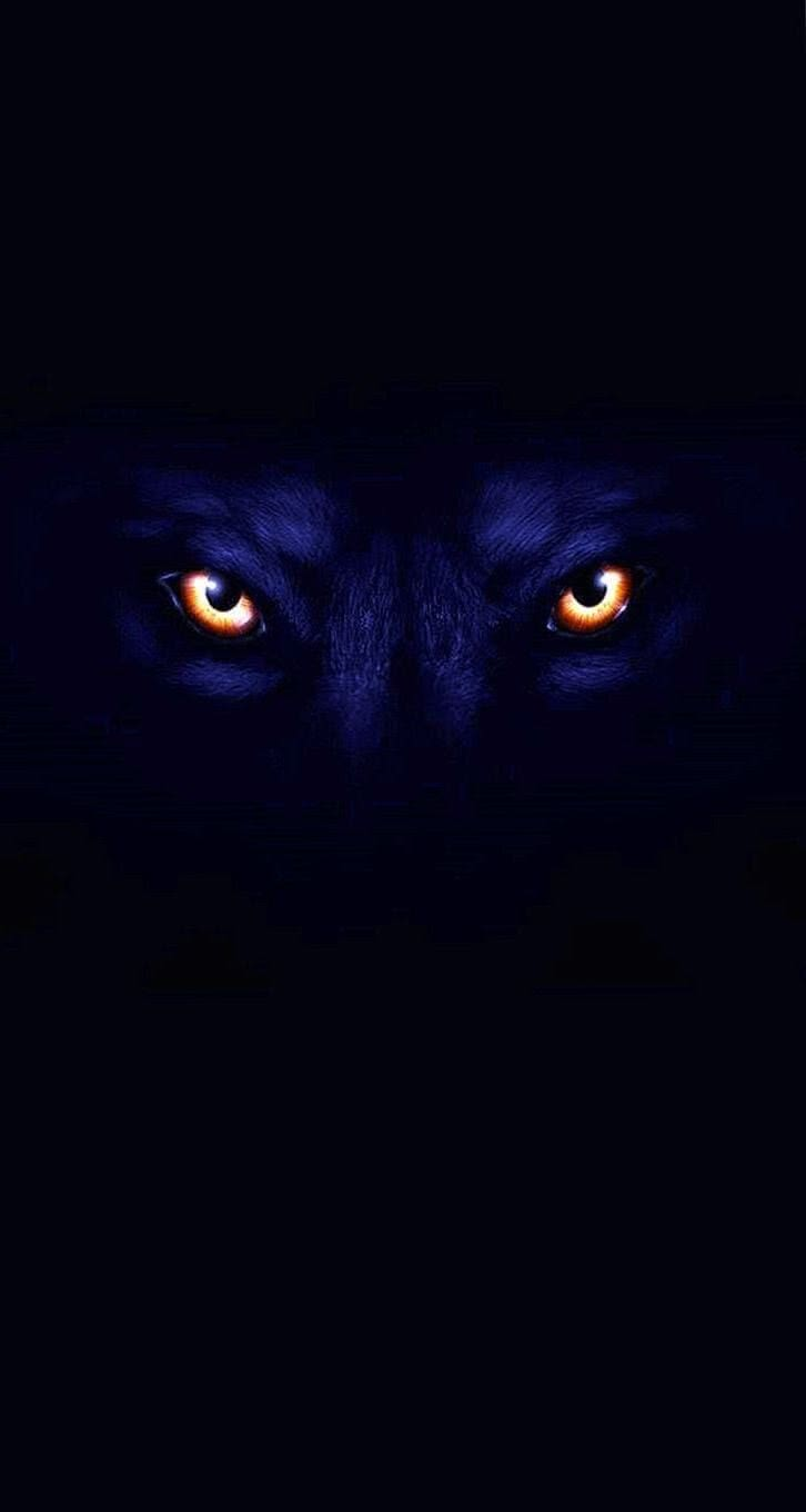 Black Wolves Eyes Wallpaper