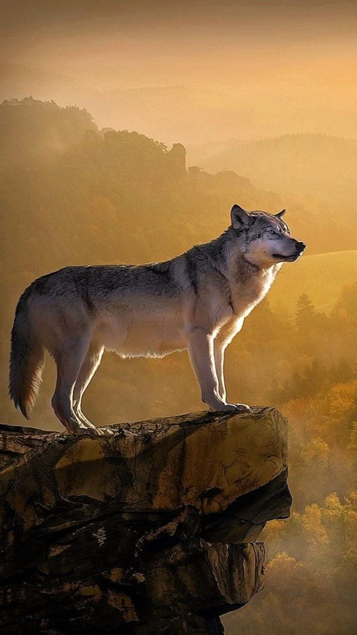 iPhone 6S Wolf Wallpapers