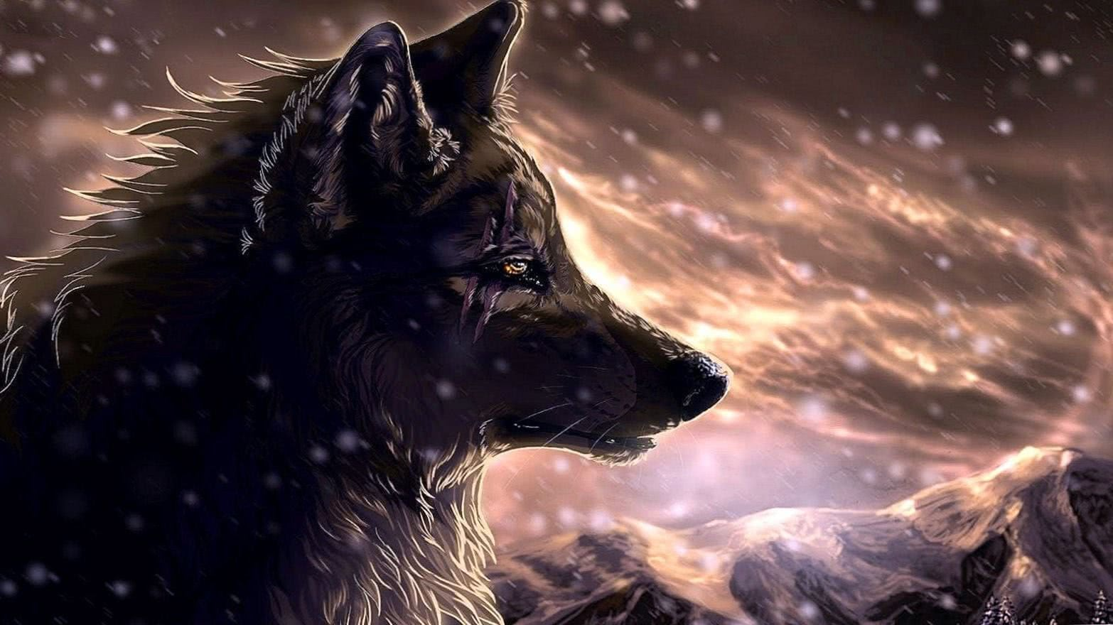 Wolf With Scars Wallpapers
