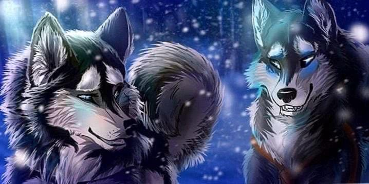 Blue Wolf Animation Wallpapers