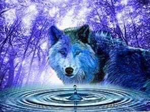 Wolf In Water Wallpapers