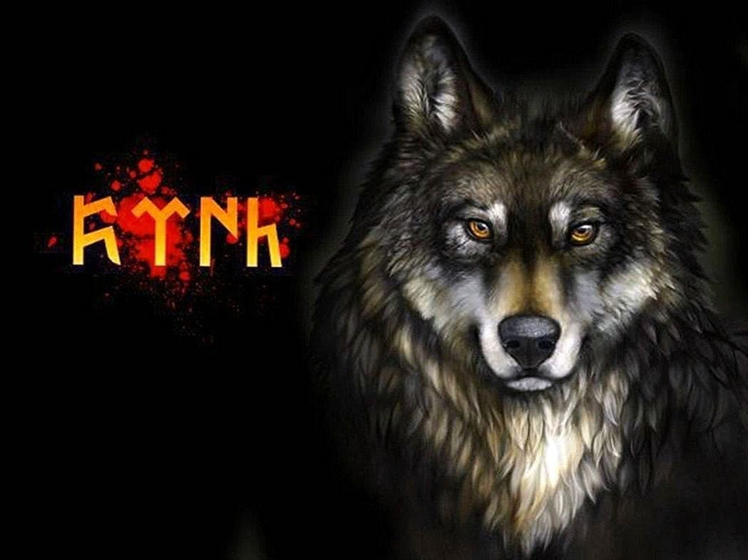 Turkish Wolf Wallpapers