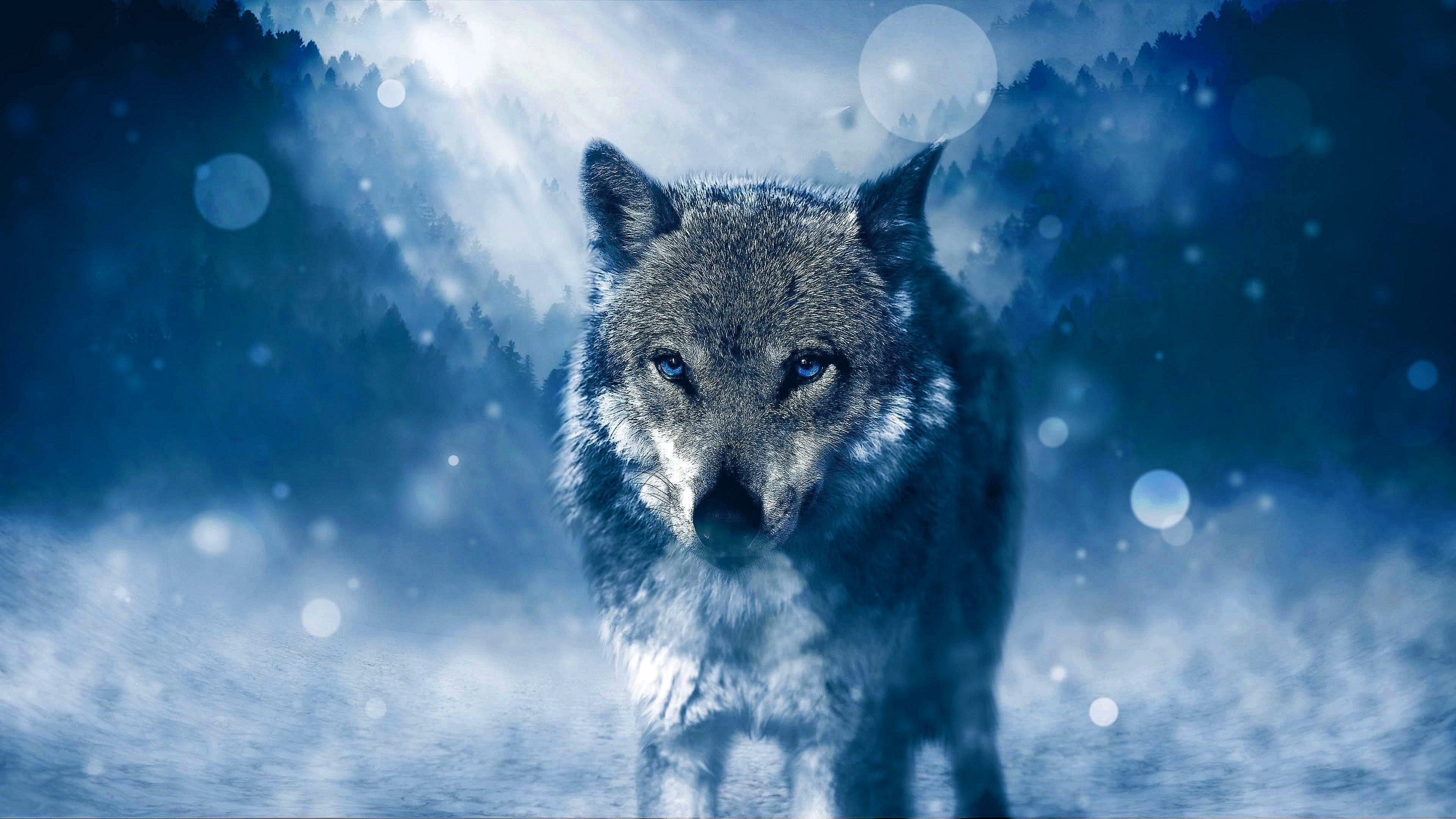Wolf Wallpapers 4K For Laptop