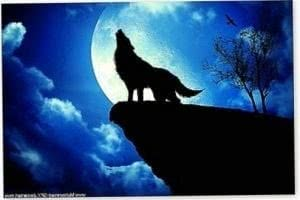 Wolf Wallpapers For iPod