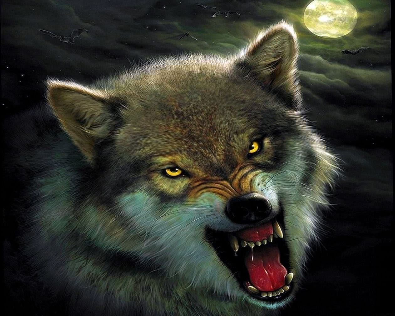 Yellow Wolf Wallpapers