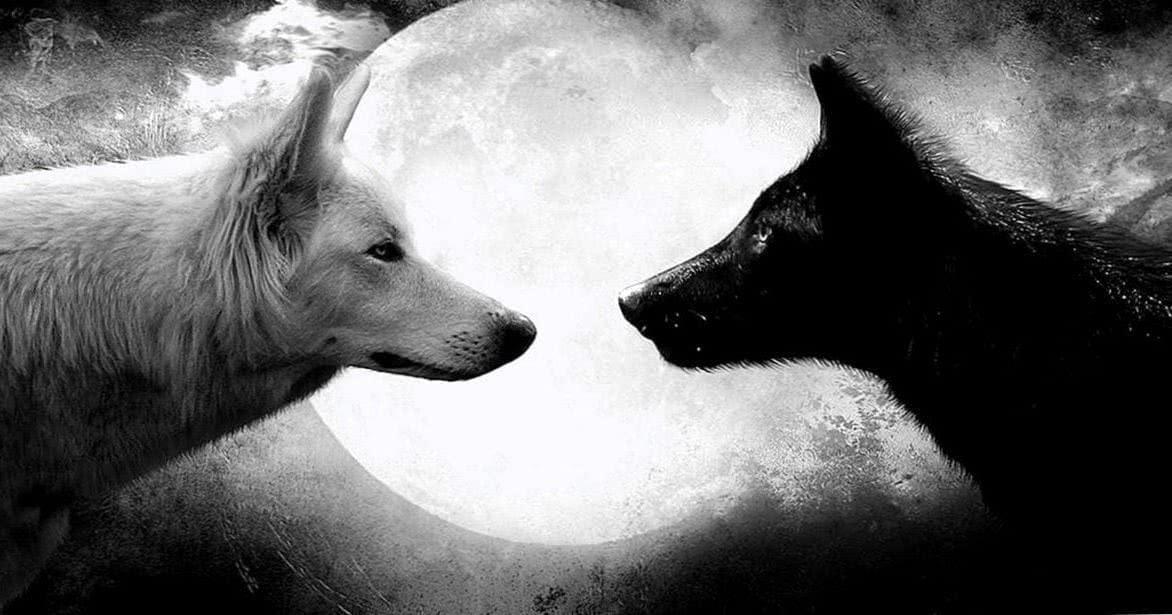 Black Wolf Wallpaper Full HD