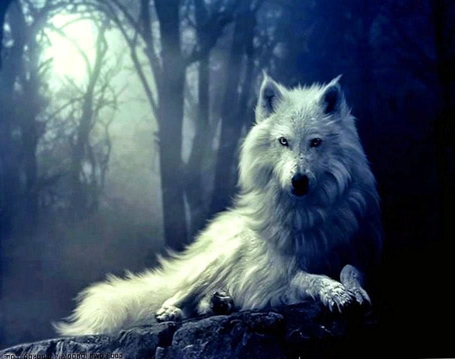 Wolf Wallpapers HD For Android
