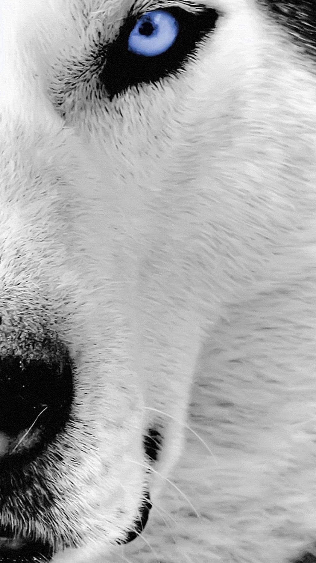 Wolf Face iPhone Wallpapers