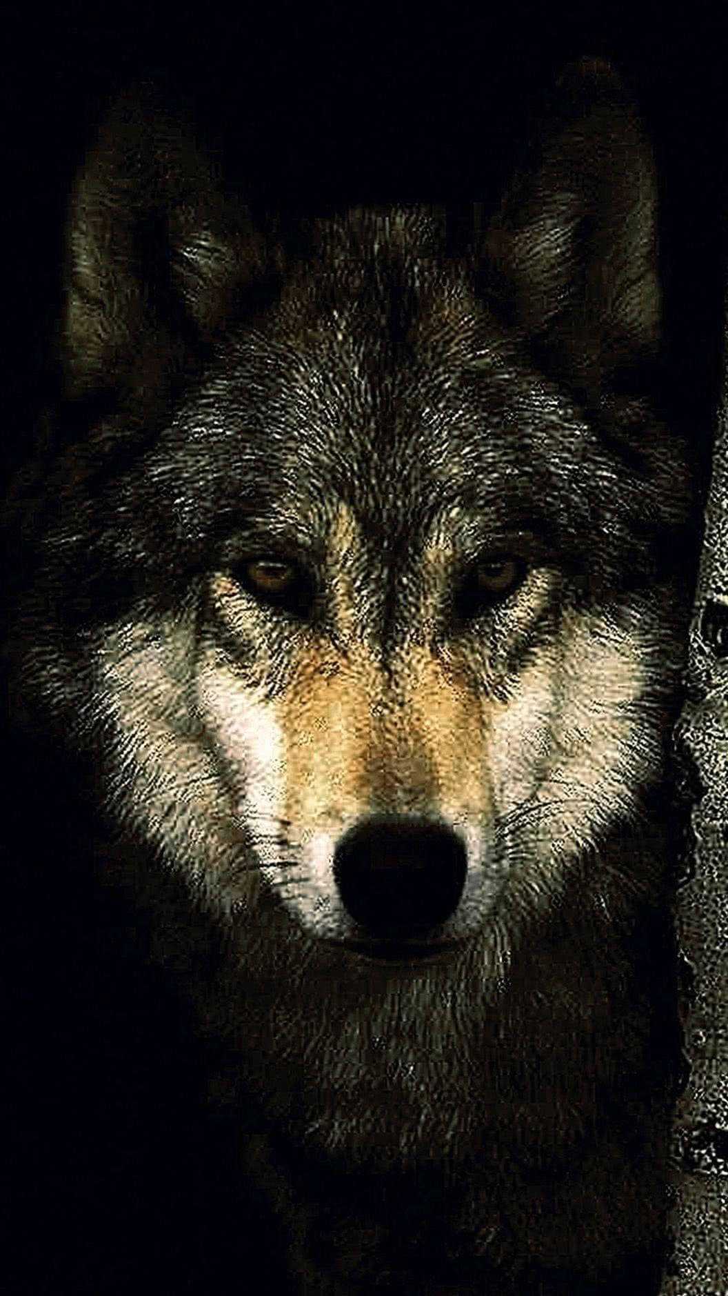 Black Wolf iPhone Wallpaper HD