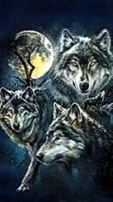 Wallpapers Wolf iPhone 5