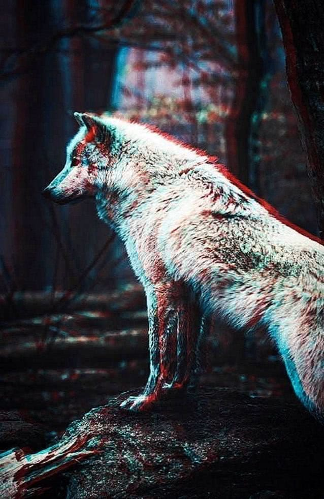 Wallpaper iPhone 8 Wolf