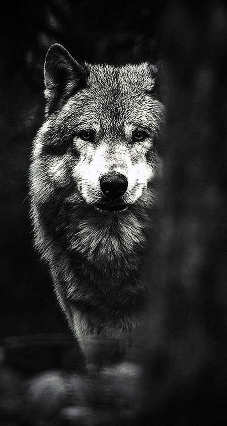 Wallpapers iPhone X Wolf
