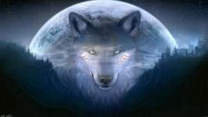 1600x900 Wallpapers Wolf