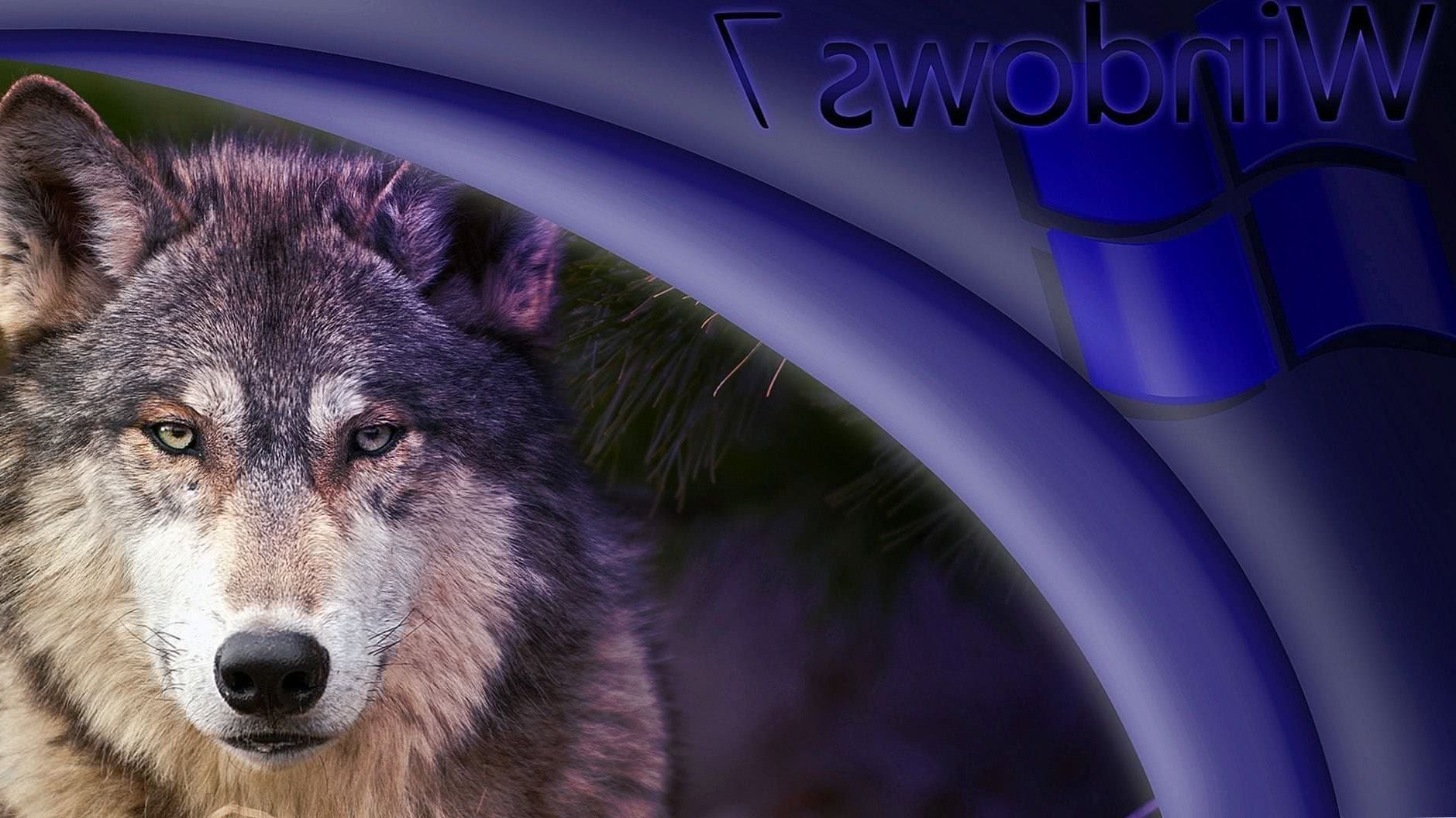 Windows 7 Wolf Wallpaper