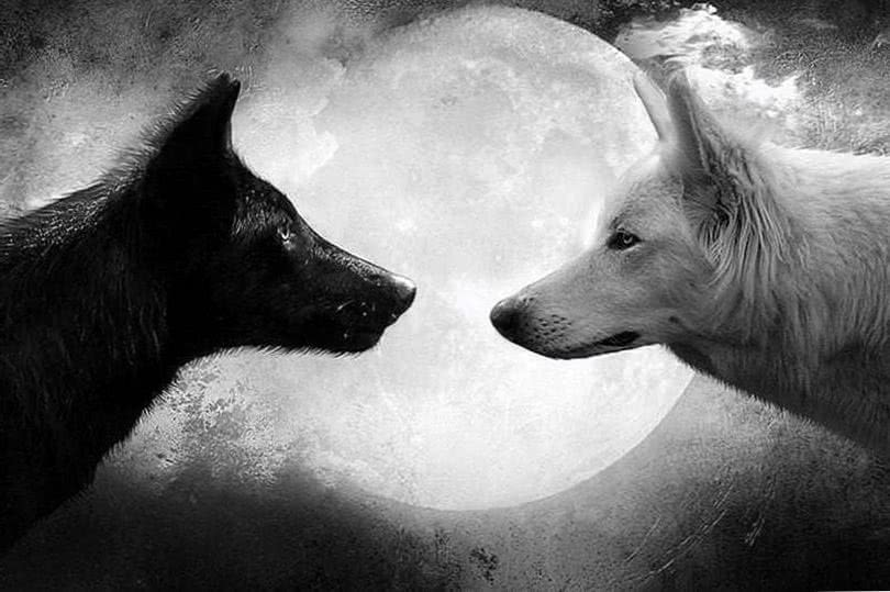 Wallpapers Wolf 1080p