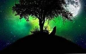 Green Wolf HD Wallpapers
