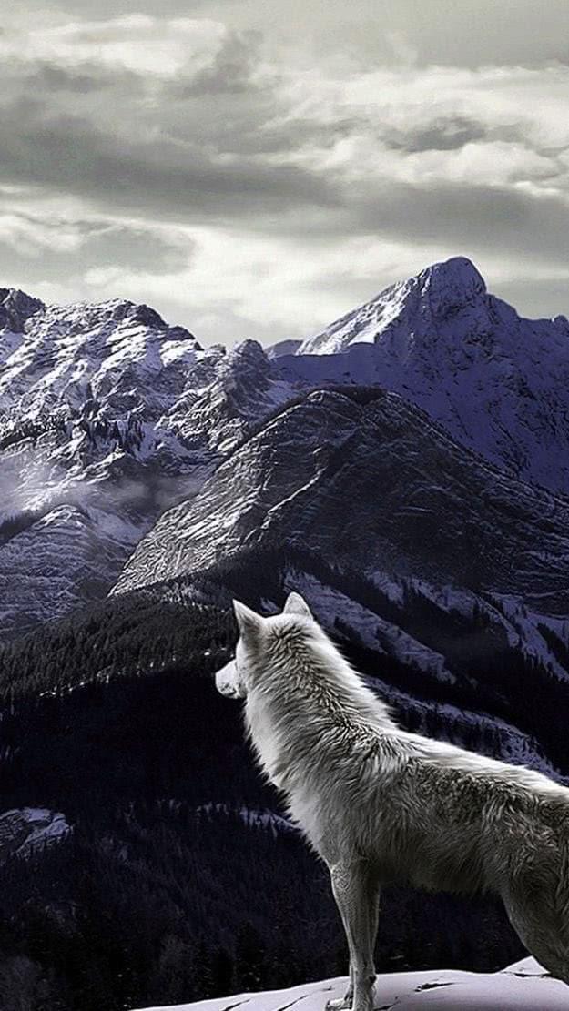 White Wolf Wallpapers Celular