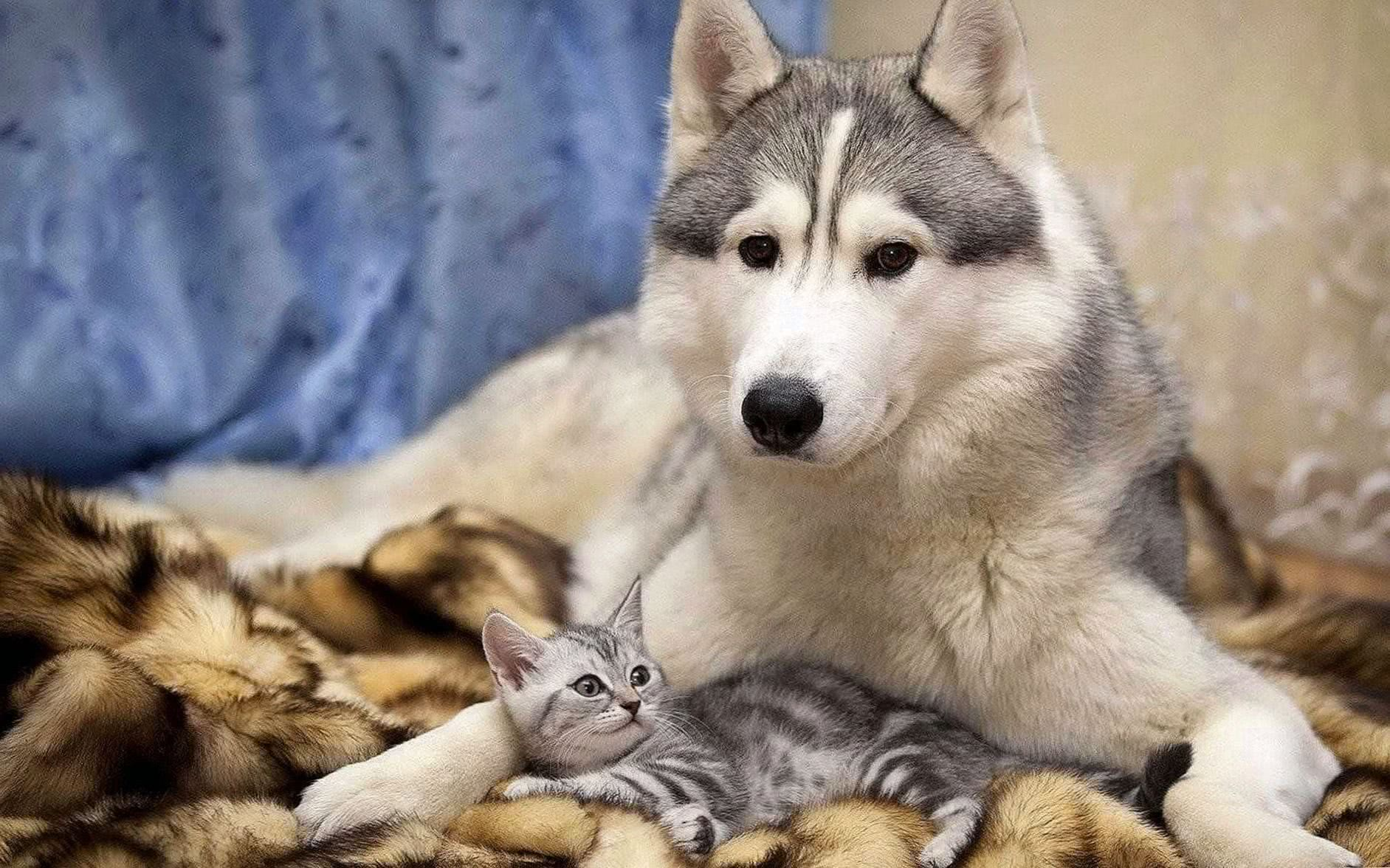 Wolf And Cat Wallpapers