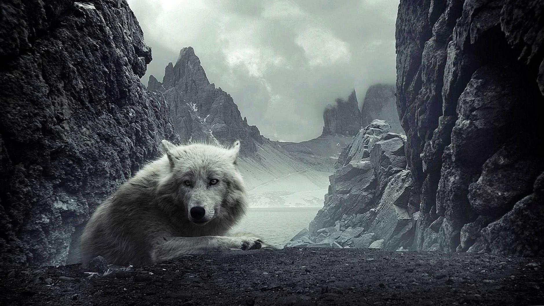 Wallpaper Wolf 1920×1080