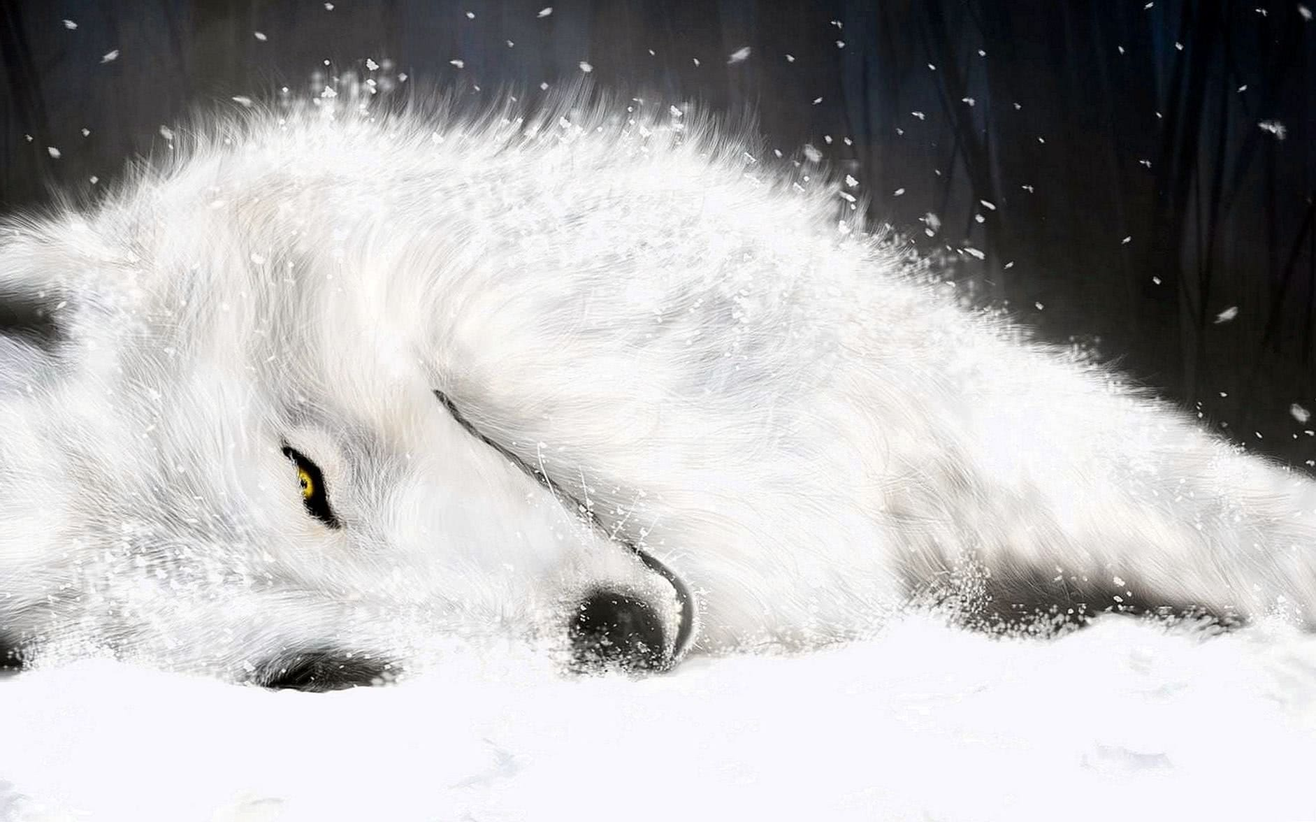 Wolf Wallpaper Awesome