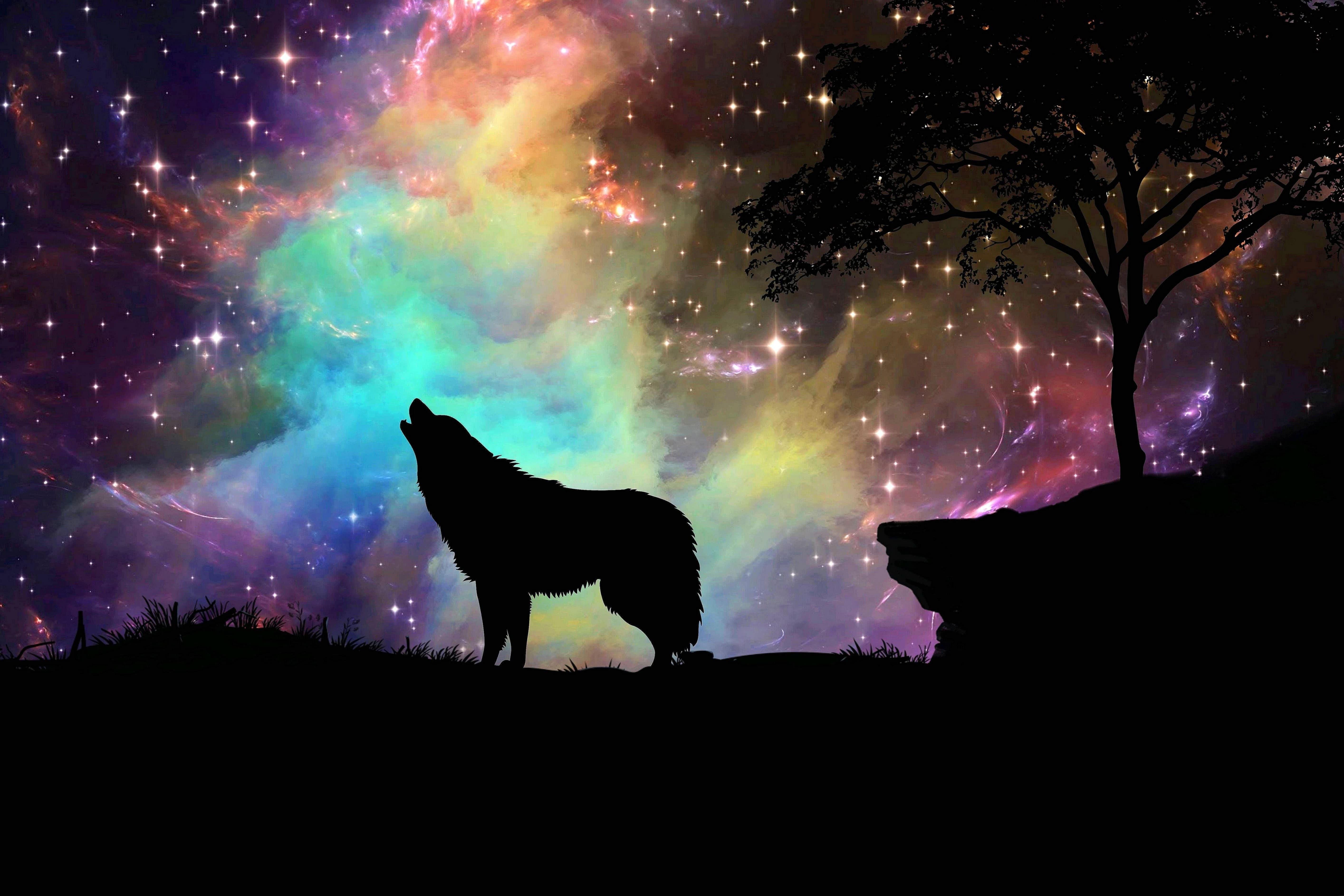 Wolf Howling 4K Wallpaper