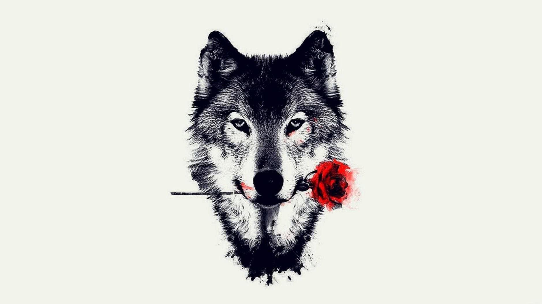 HD Wolf Wallpapers For Laptop