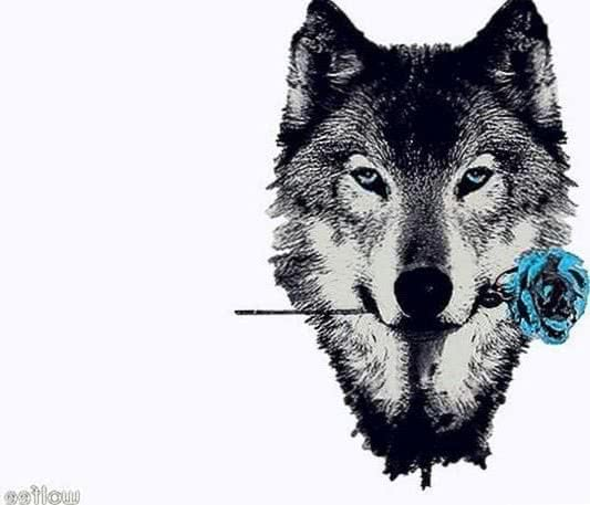 Wolf And Rose Wallpaper
