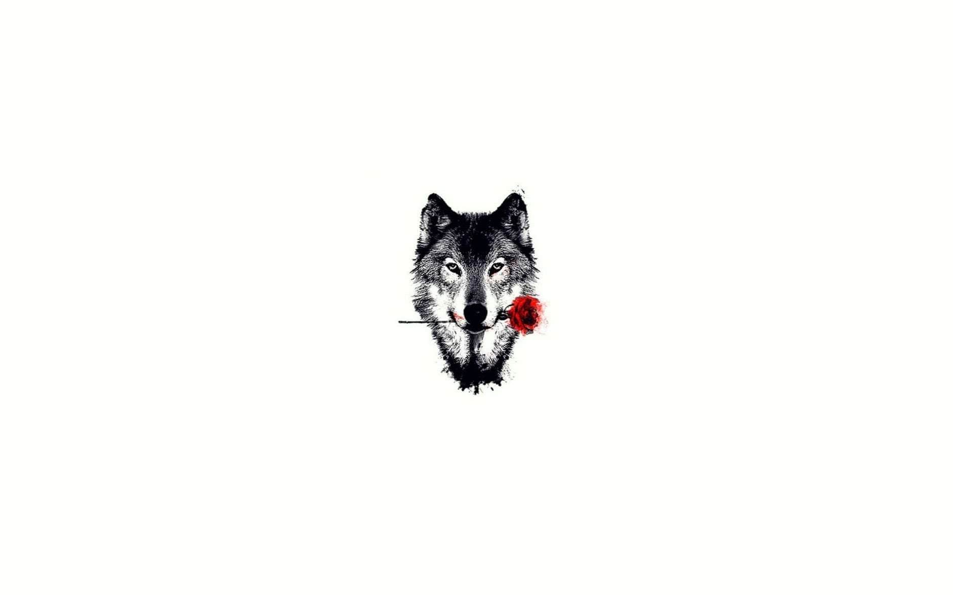 Wolf With Rose Wallpapers