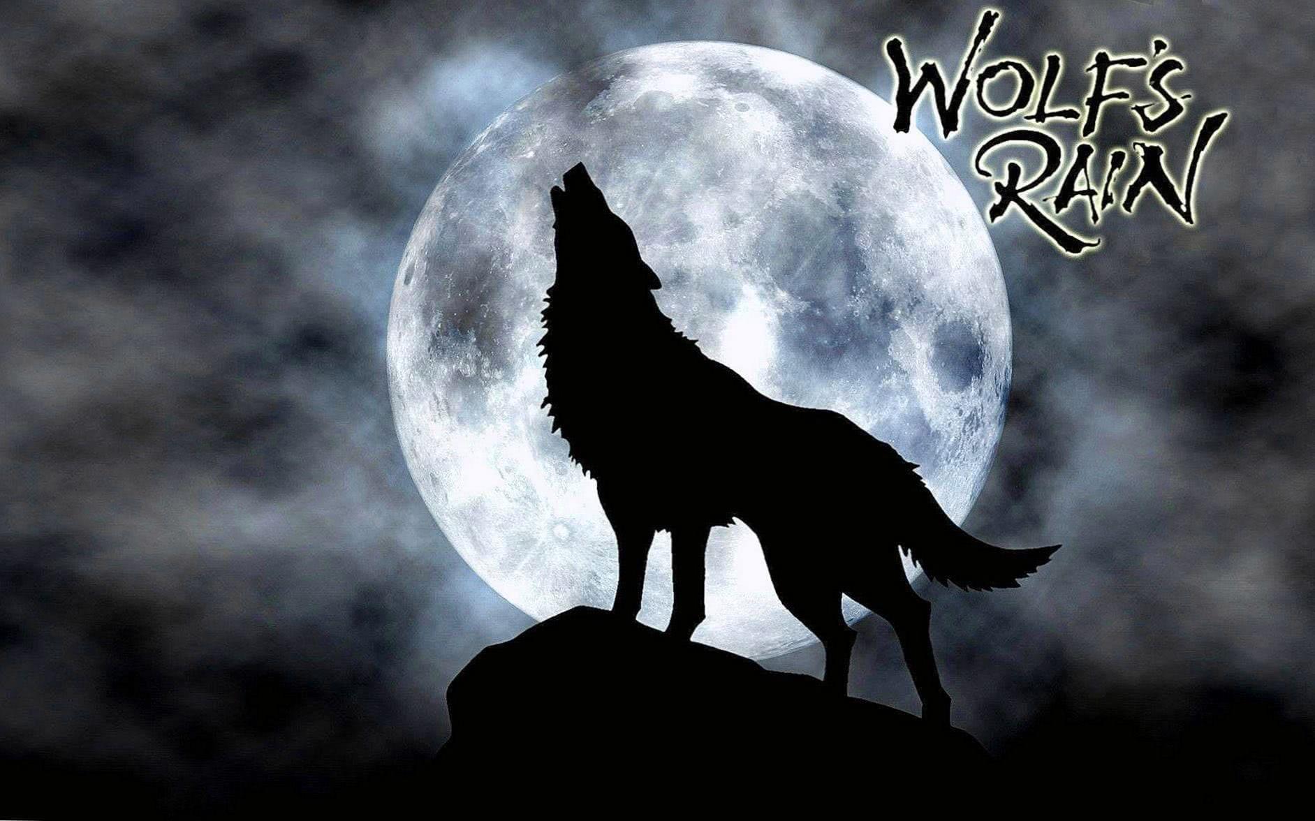 Wolfs Rain Wolf Wallpapers