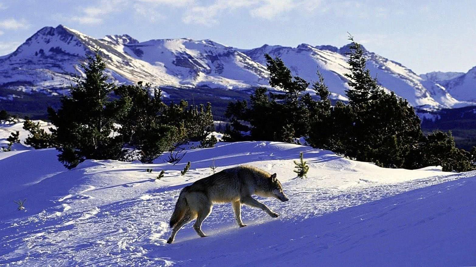 Wolf Mountains Wallpaper