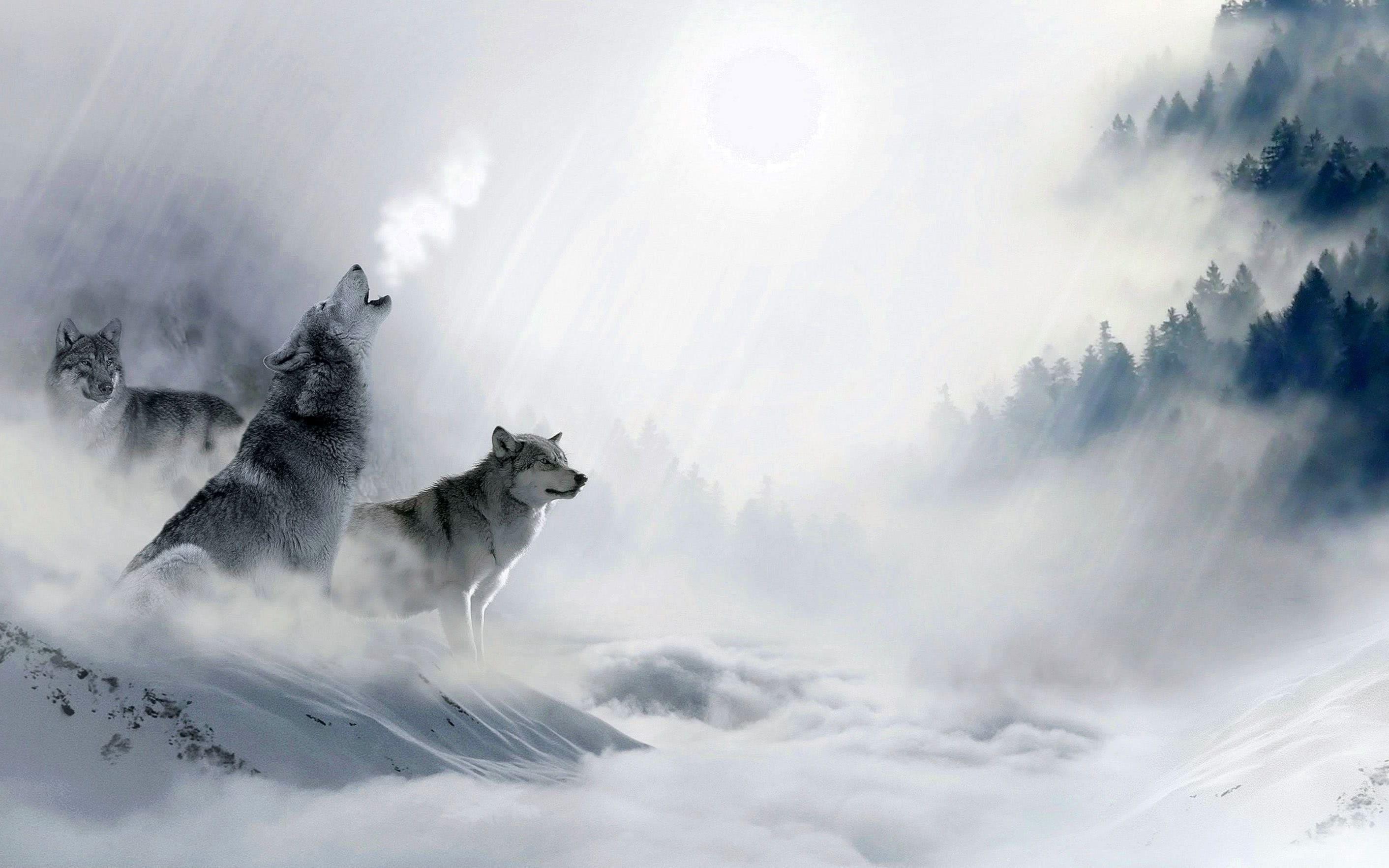 4K Wallpaper Howling Wolf