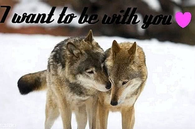 Wolf Group Wallpaper
