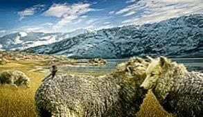 Wolf In Sheeps Clothing HD Wallpapers