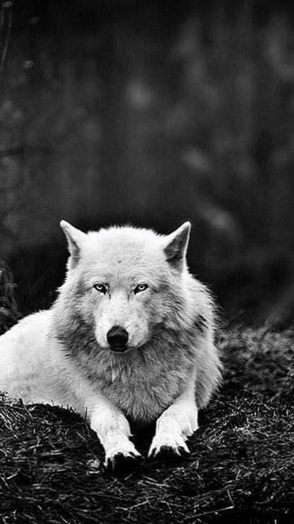 Werewolf Wallpaper Tumblr