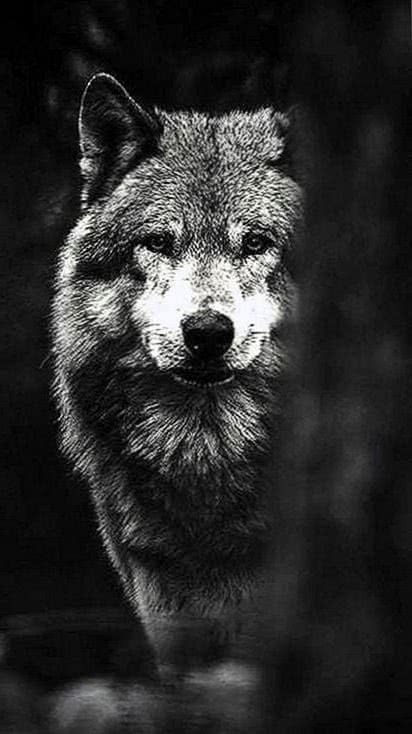 Wallpapers Tumblr Wolves Wolf Wallpaperspro
