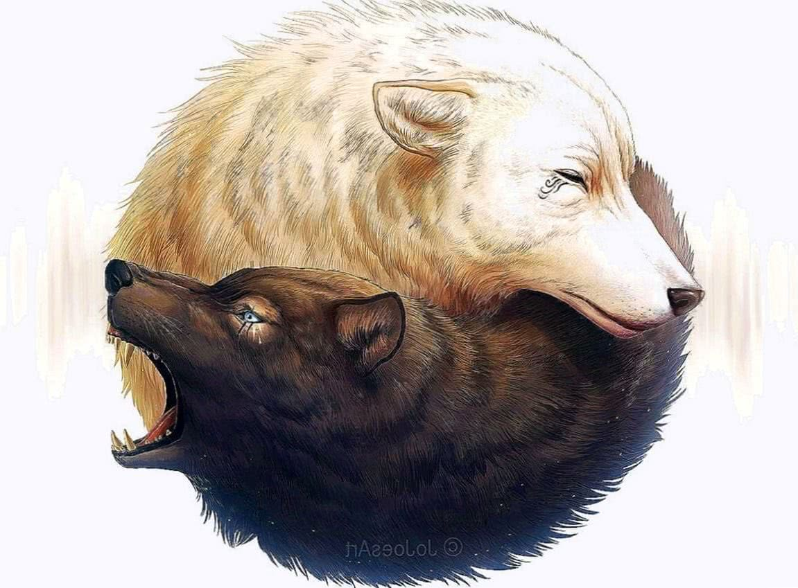 Yin And Yang Wolf Wallpapers