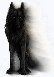Dark Wolf Wallpapers Png